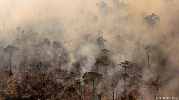 لهذه الأسباب.. غابات الأمازون مهمة جداً للعالم كله